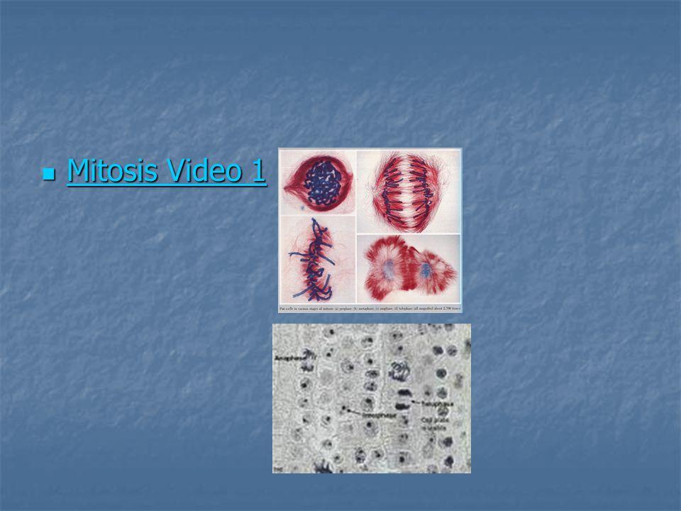 Mitosis Video 1