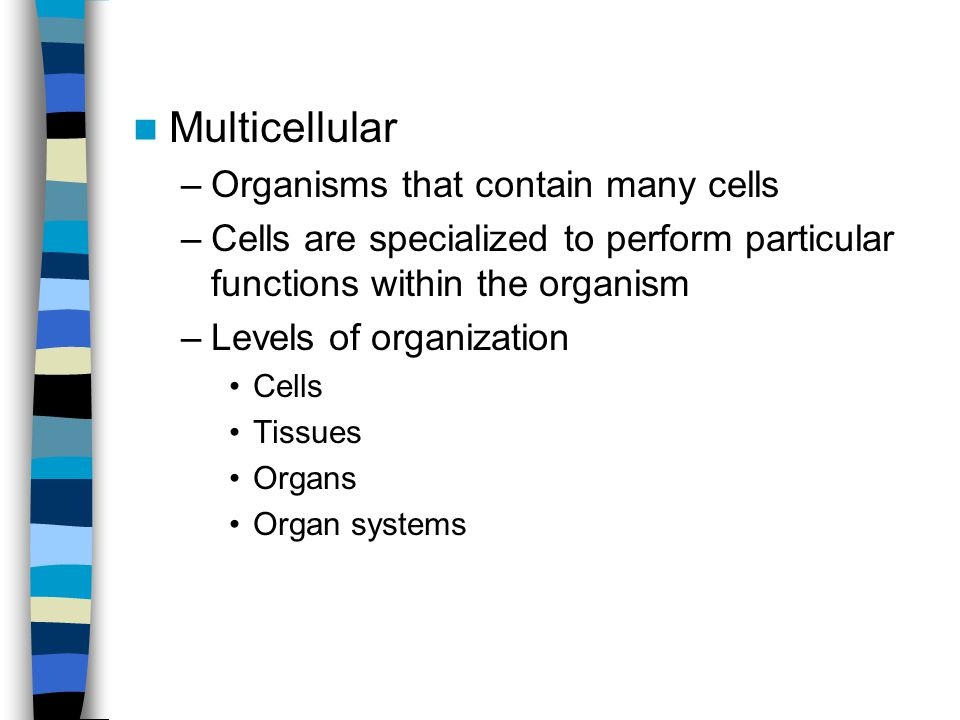 Multicellular Organisms that contain many cells