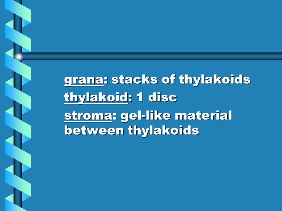 grana: stacks of thylakoids