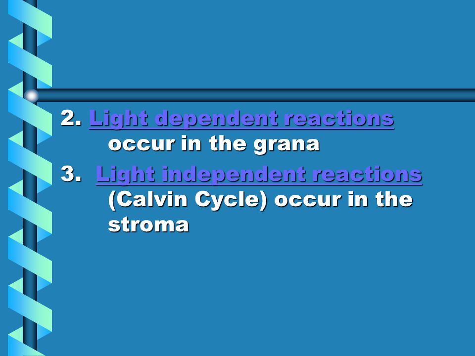 2. Light dependent reactions occur in the grana