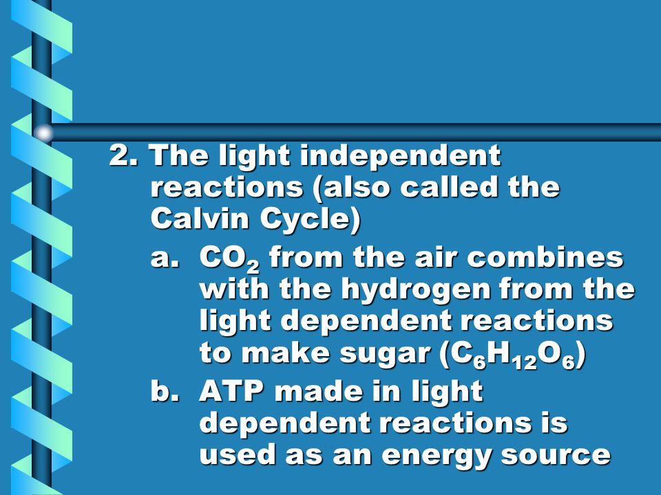 2. The light independent reactions (also called the Calvin Cycle)