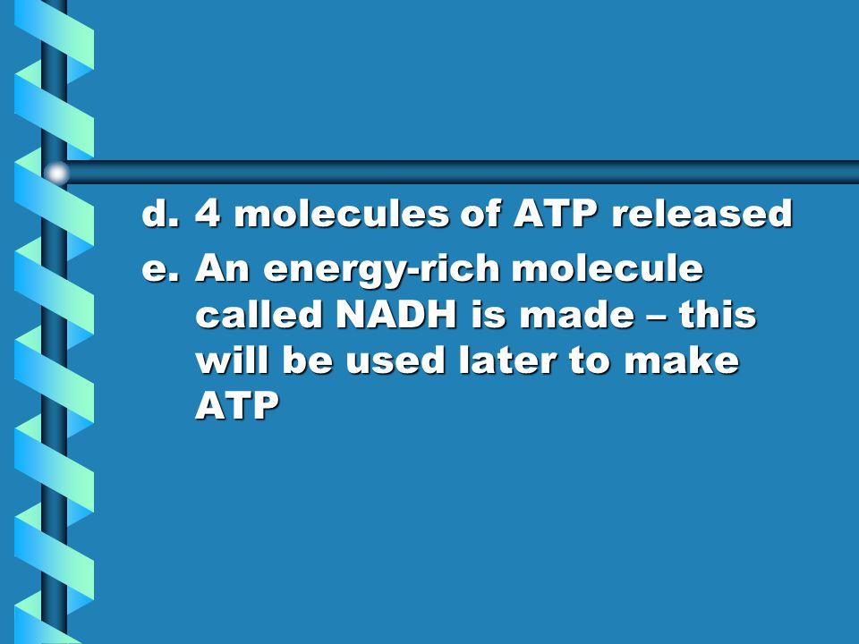 d. 4 molecules of ATP released