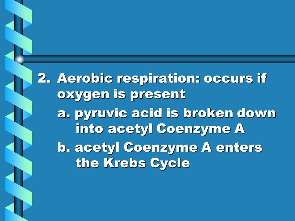 Aerobic respiration: occurs if oxygen is present