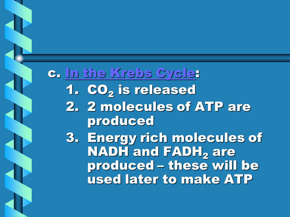 c. In the Krebs Cycle: 1. CO2 is released. 2. 2 molecules of ATP are produced.