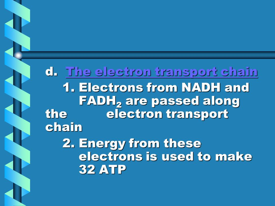 d. The electron transport chain