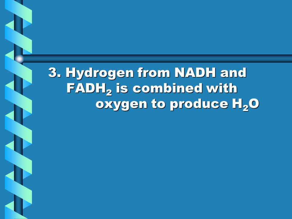 3. Hydrogen from NADH and FADH2 is combined with oxygen to produce H2O