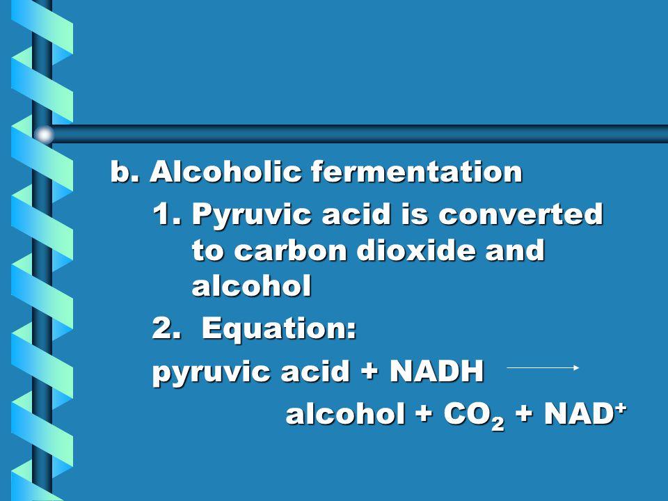 b. Alcoholic fermentation