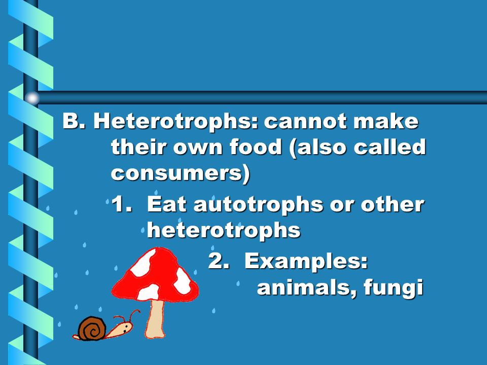 B. Heterotrophs: cannot make their own food (also called consumers)