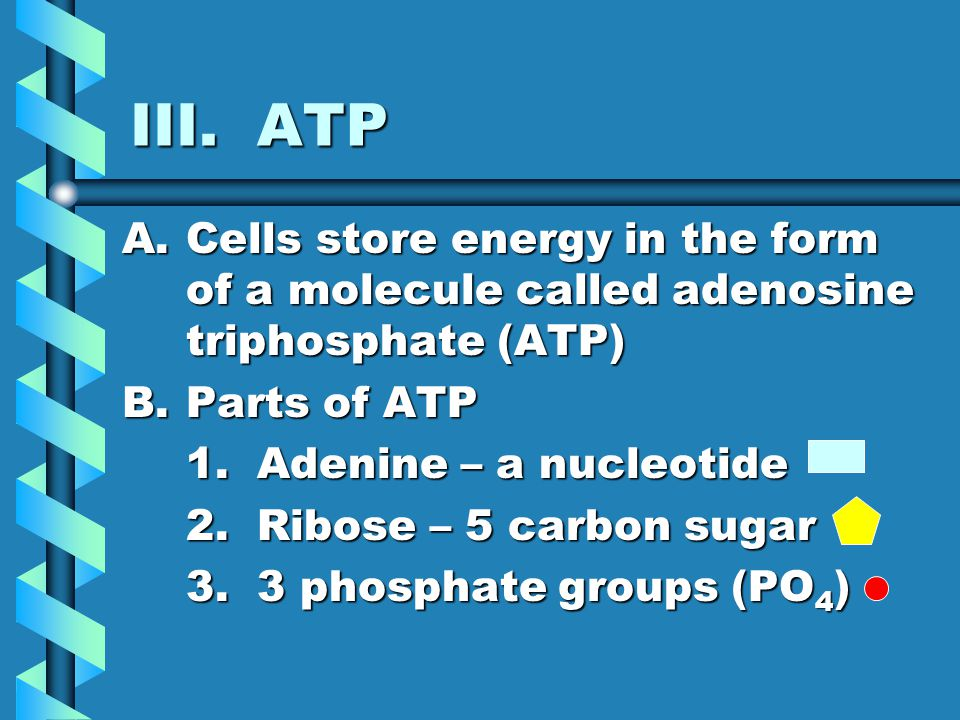 III. ATP Cells store energy in the form of a molecule called adenosine triphosphate (ATP) Parts of ATP.