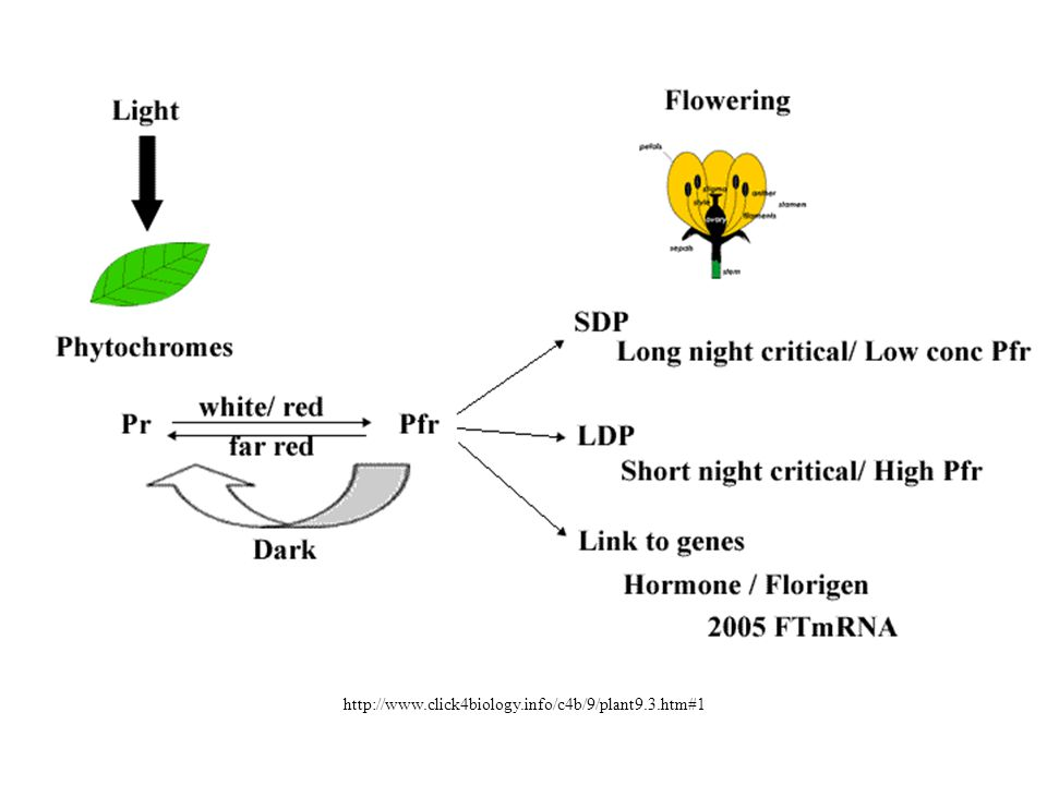 http://www.click4biology.info/c4b/9/plant9.3.htm#1
