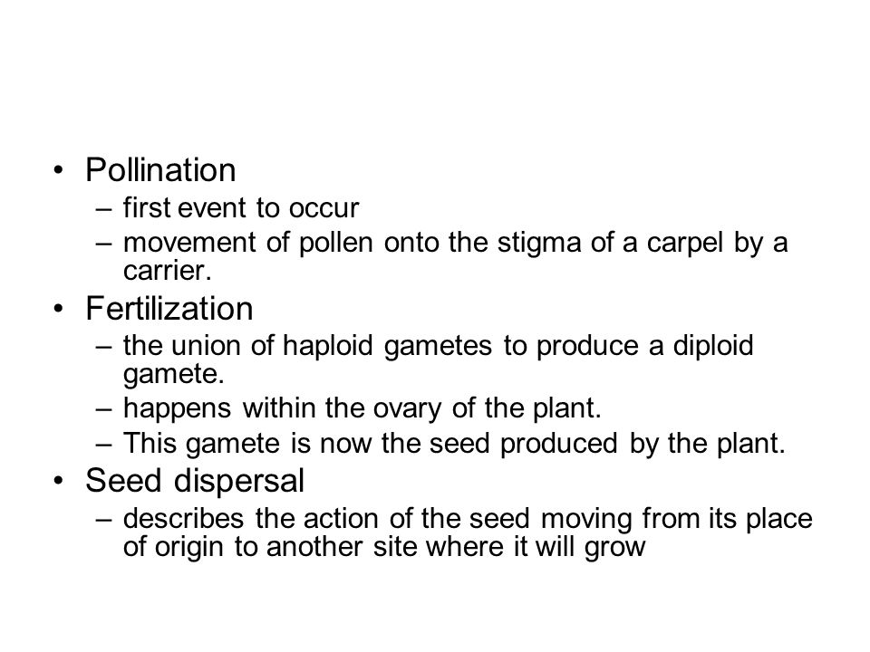 Pollination Fertilization Seed dispersal first event to occur