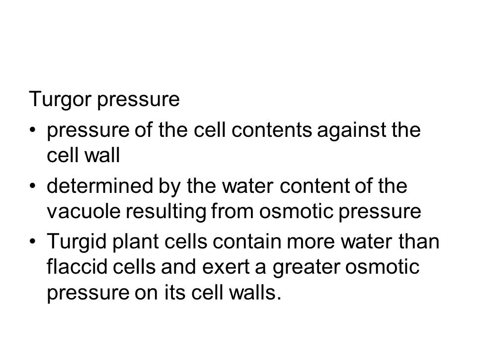 Turgor pressure pressure of the cell contents against the cell wall. determined by the water content of the vacuole resulting from osmotic pressure.