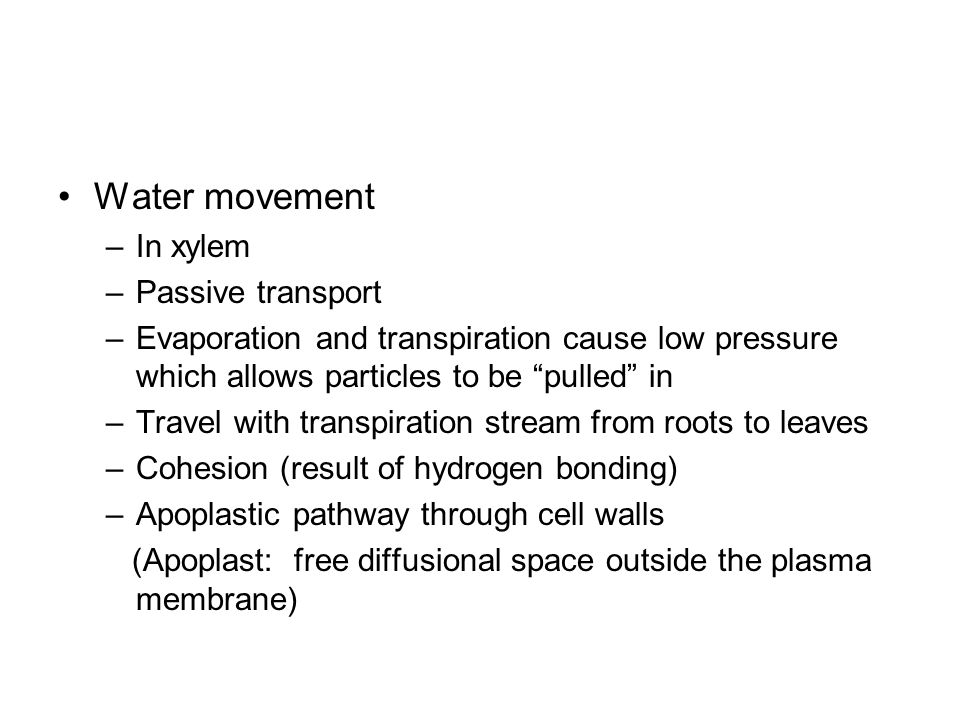 Water movement In xylem Passive transport