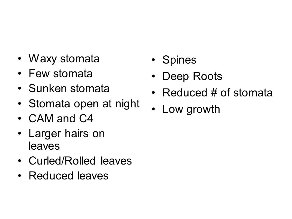 Waxy stomata Few stomata. Sunken stomata. Stomata open at night. CAM and C4. Larger hairs on leaves.