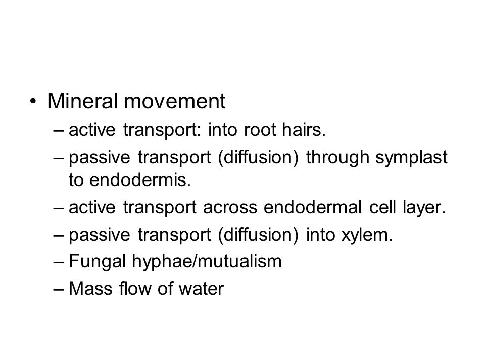 Mineral movement active transport: into root hairs.