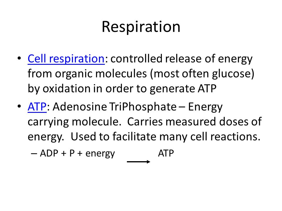 Respiration Cell respiration: controlled release of energy from organic molecules (most often glucose) by oxidation in order to generate ATP.