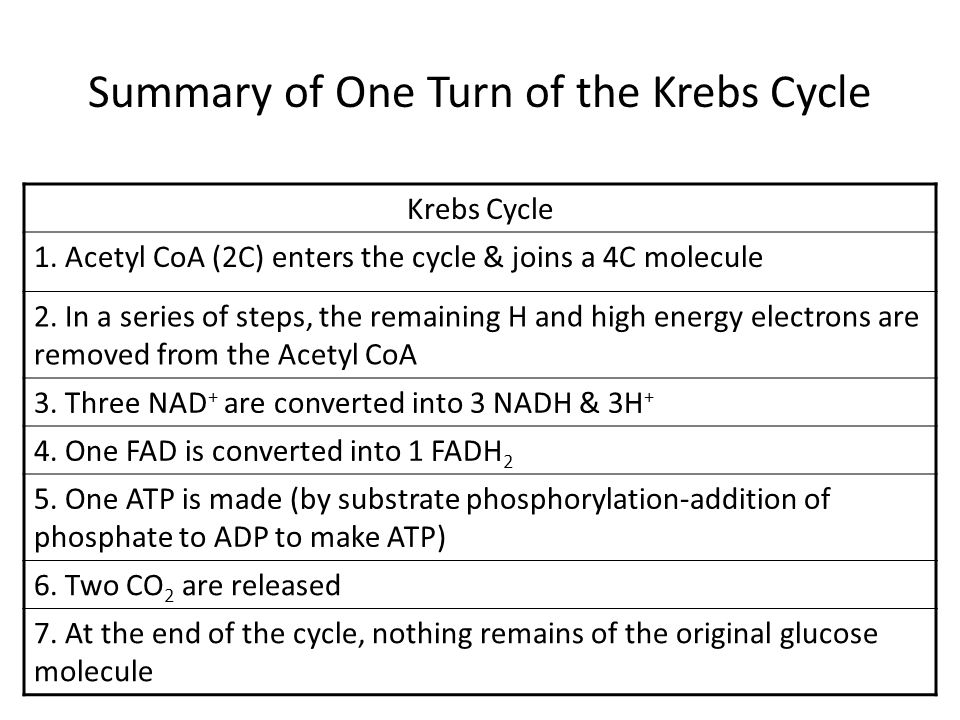 Summary of One Turn of the Krebs Cycle