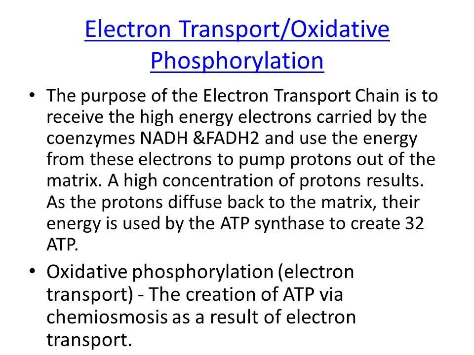Electron Transport/Oxidative Phosphorylation