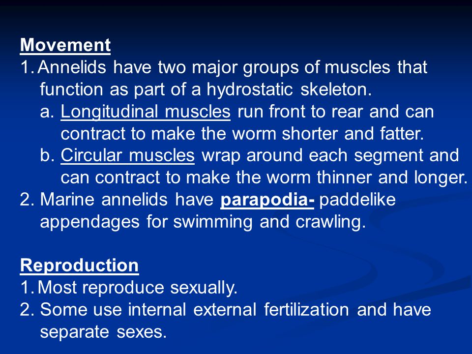 Movement Annelids have two major groups of muscles that. function as part of a hydrostatic skeleton.