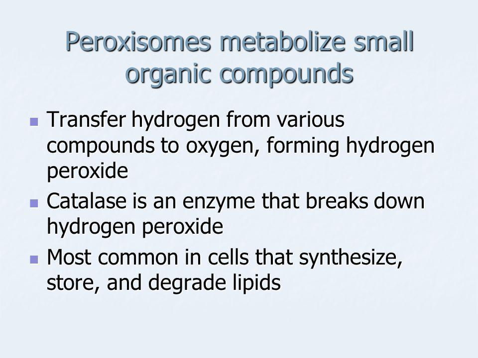 Peroxisomes metabolize small organic compounds