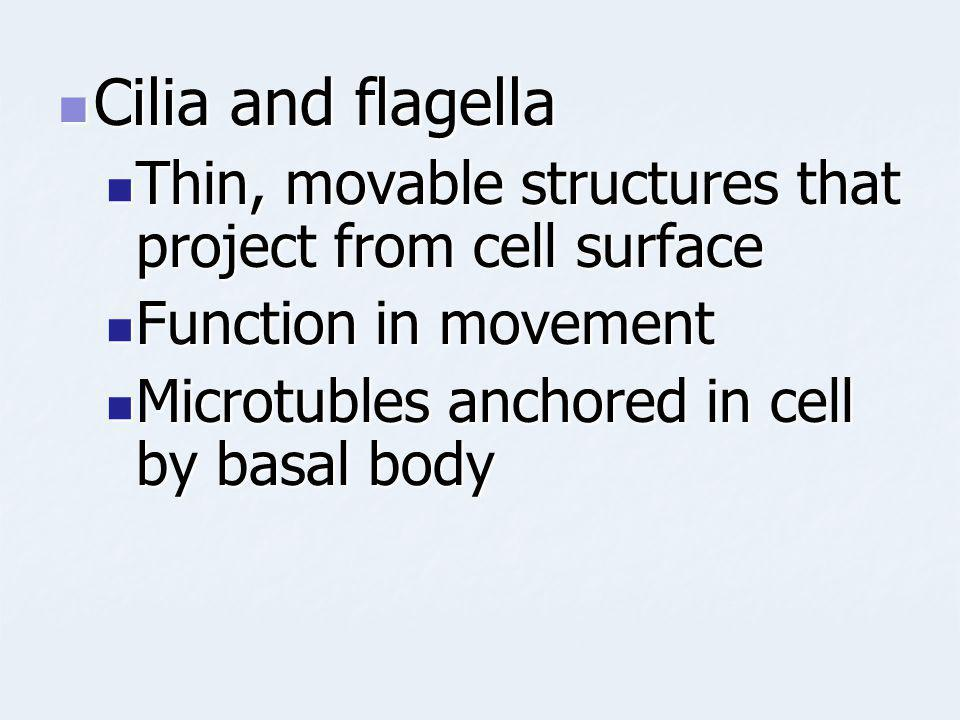 Cilia and flagella Thin, movable structures that project from cell surface.