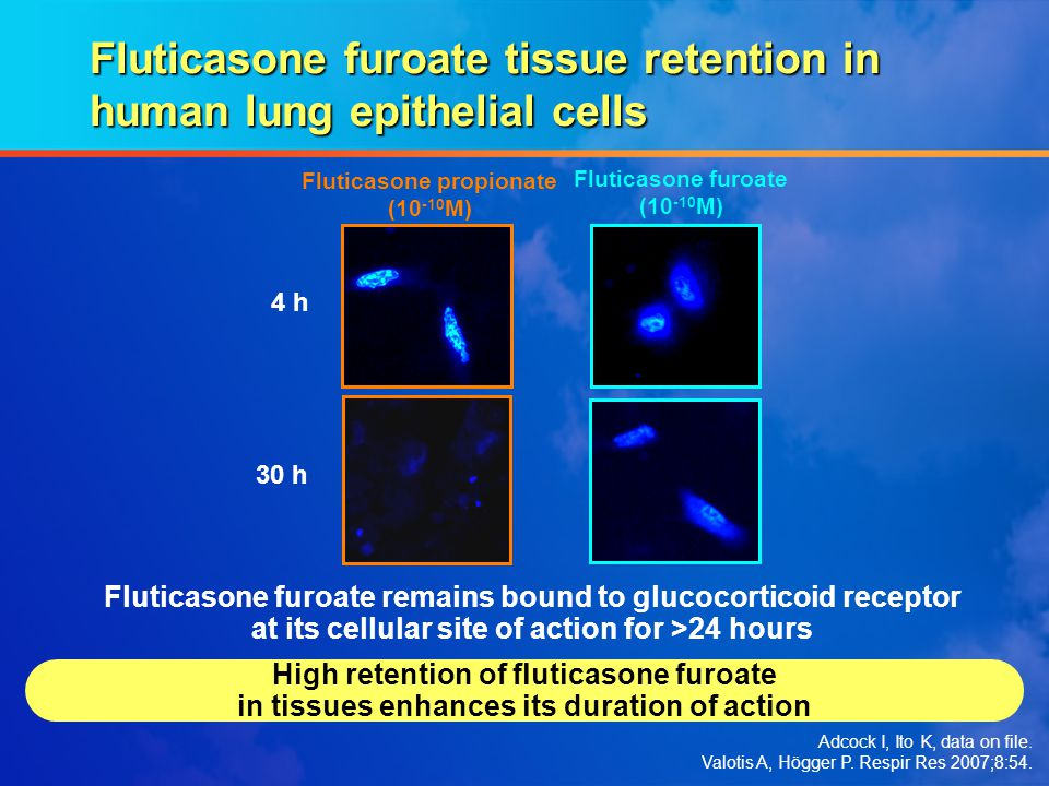 Fluticasone furoate tissue retention in human lung epithelial cells