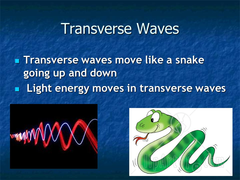Transverse Waves Transverse waves move like a snake going up and down