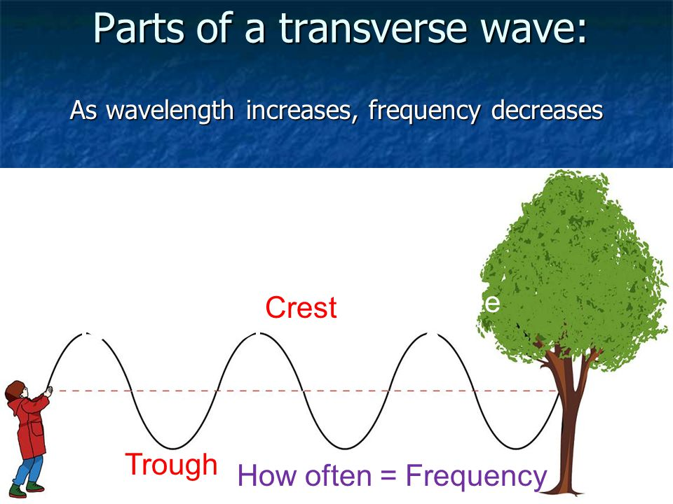 Parts of a transverse wave: