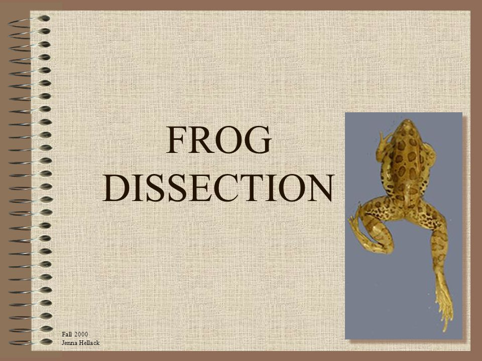 FROG DISSECTION Fall 2000 Jenna Hellack