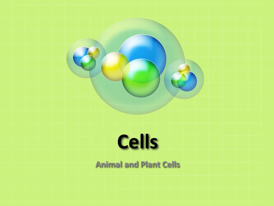 Cells Animal and Plant Cells