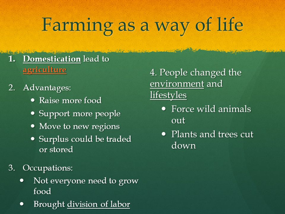 Farming as a way of life Domestication lead to agriculture. Advantages: Raise more food. Support more people.