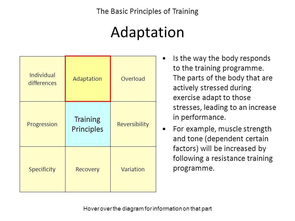 Adaptation The Basic Principles of Training