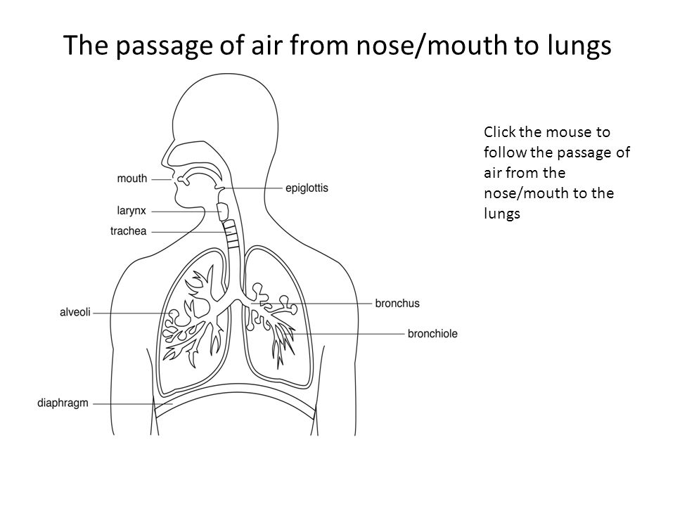The passage of air from nose/mouth to lungs