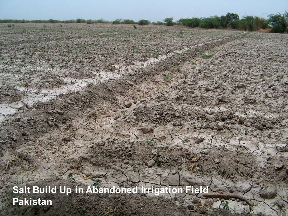 Salt Build Up in Abandoned Irrigation Field, Pakistan