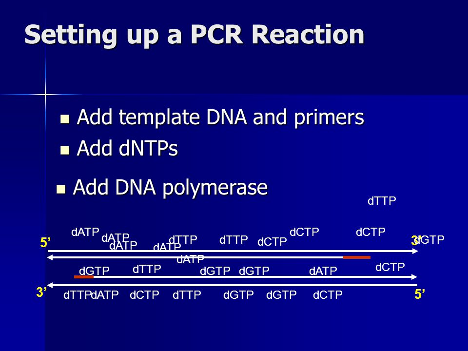 Setting up a PCR Reaction