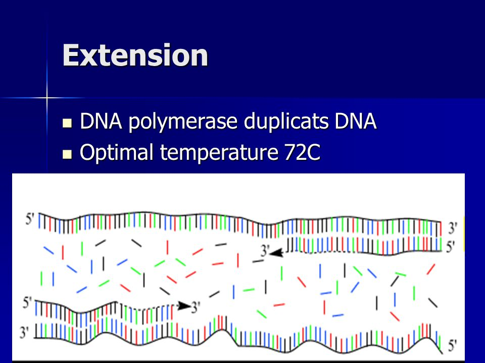 Extension DNA polymerase duplicats DNA Optimal temperature 72C
