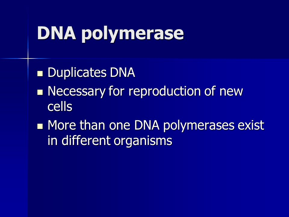 DNA polymerase Duplicates DNA Necessary for reproduction of new cells