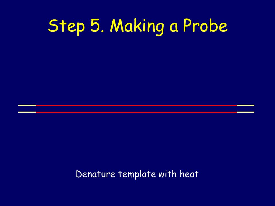 Step 5. Making a Probe Denature template with heat