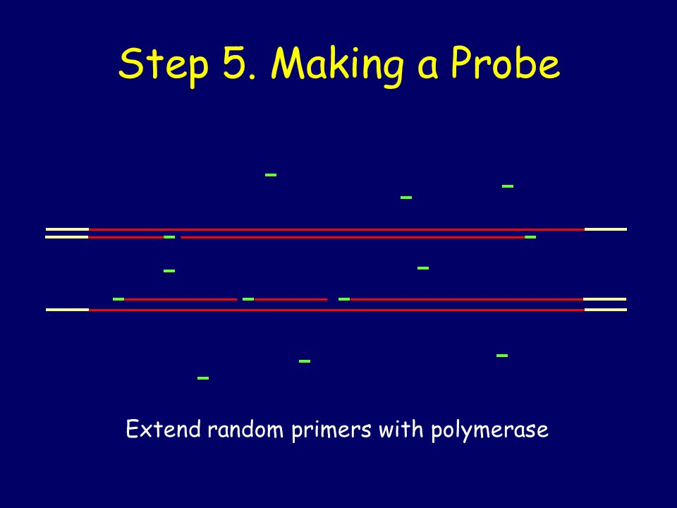 Step 5. Making a Probe Extend random primers with polymerase