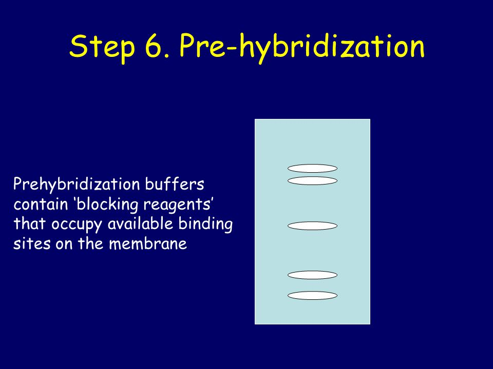 Step 6. Pre-hybridization