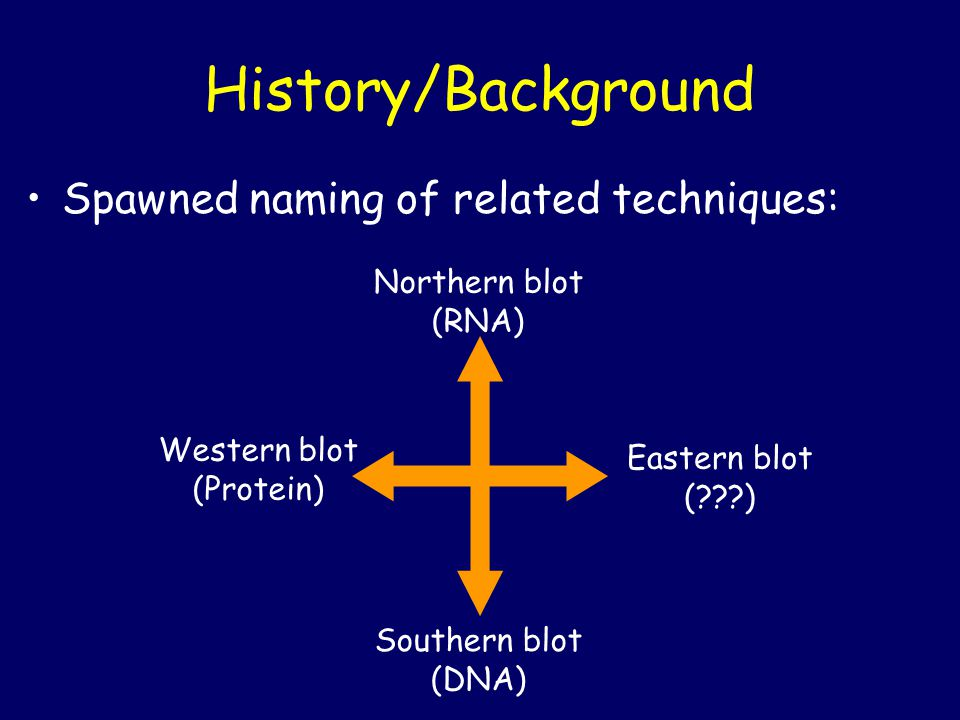 History/Background Spawned naming of related techniques: Northern blot