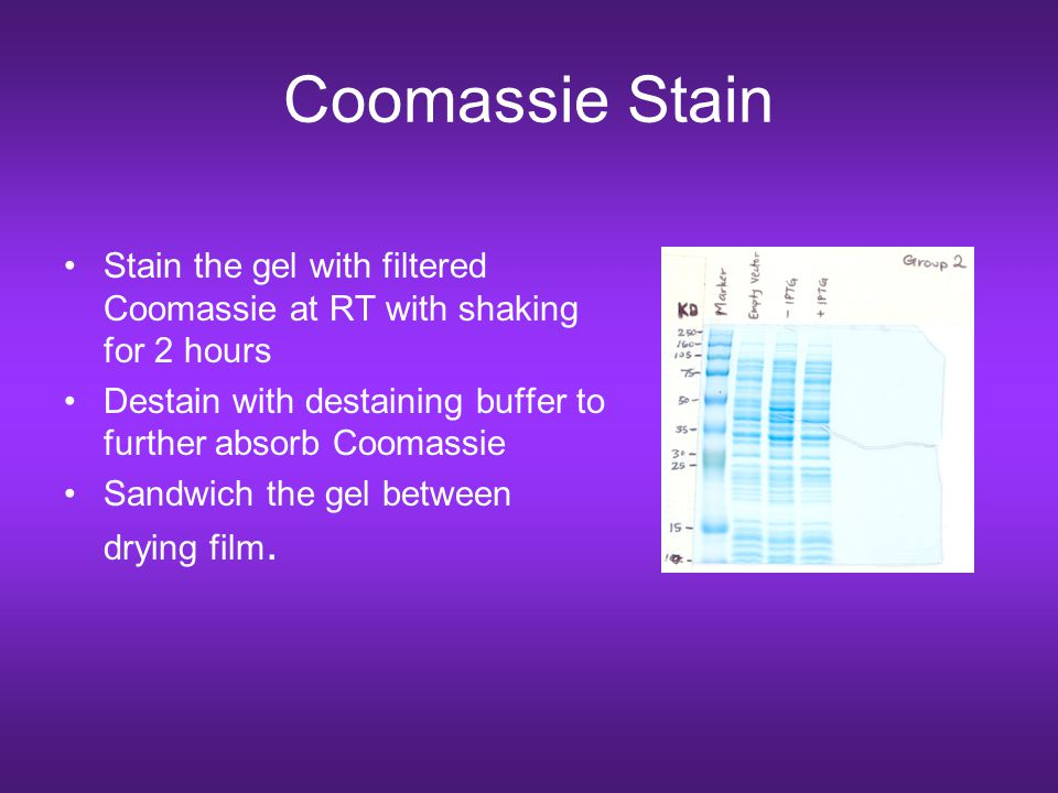 Coomassie Stain Stain the gel with filtered Coomassie at RT with shaking for 2 hours. Destain with destaining buffer to further absorb Coomassie.