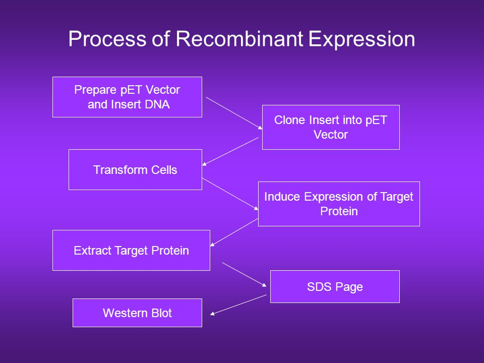 Process of Recombinant Expression