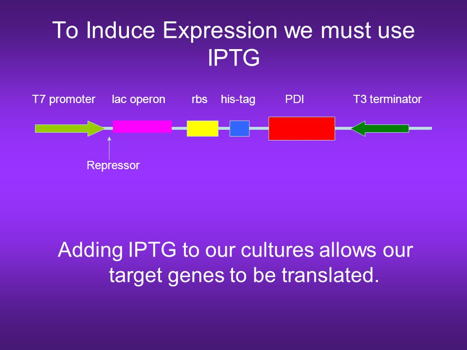 To Induce Expression we must use IPTG