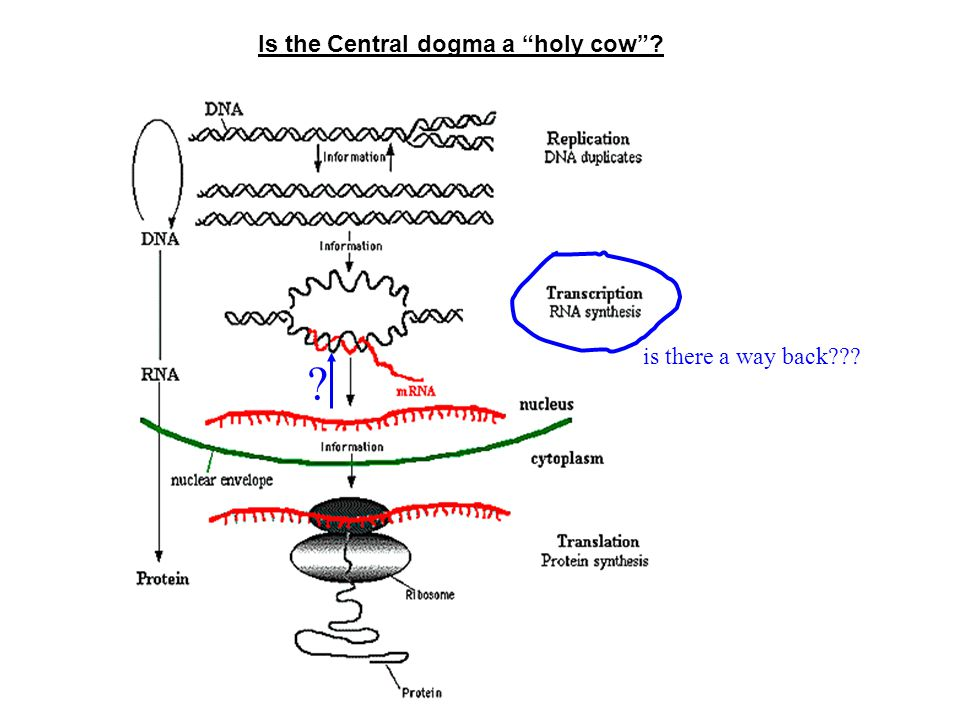 Is the Central dogma a holy cow