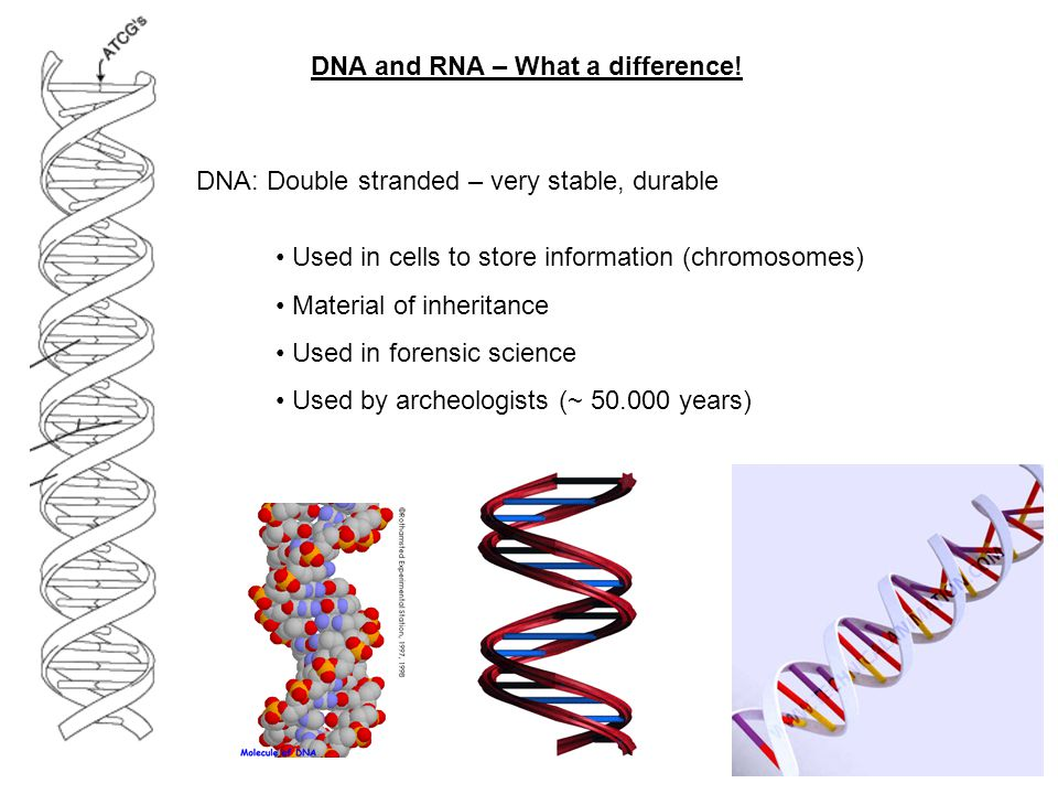 DNA and RNA – What a difference!