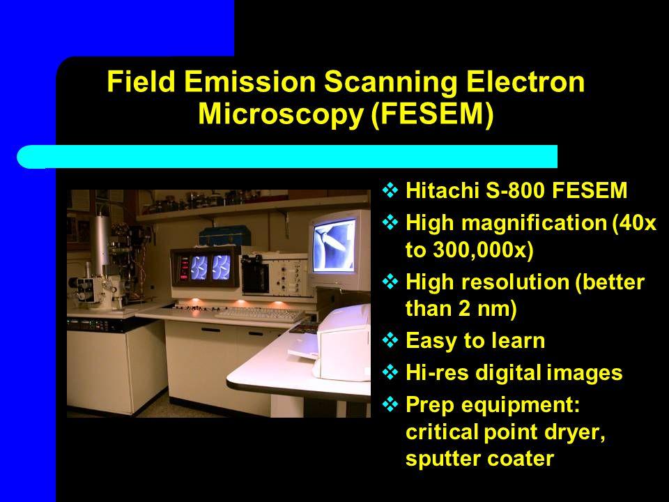 Field Emission Scanning Electron Microscopy (FESEM)