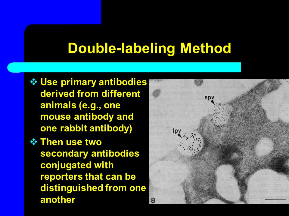 Double-labeling Method