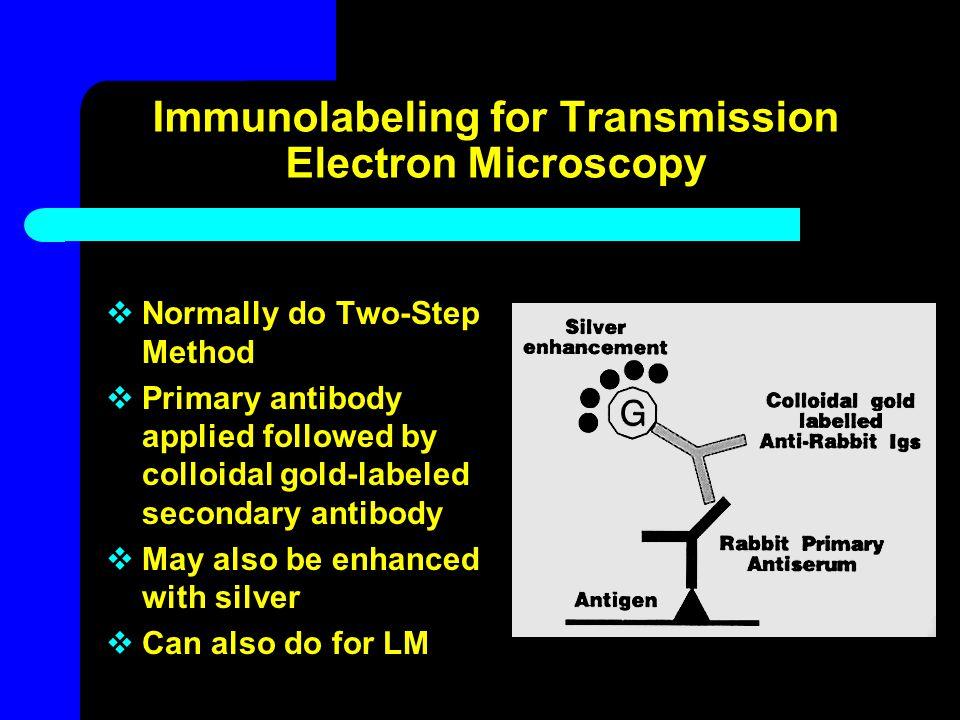 Immunolabeling for Transmission Electron Microscopy