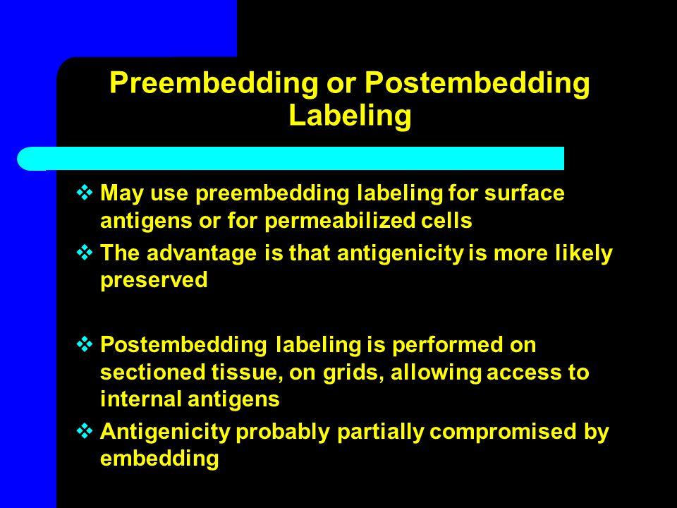 Preembedding or Postembedding Labeling